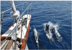 Triangolo dei cetacei